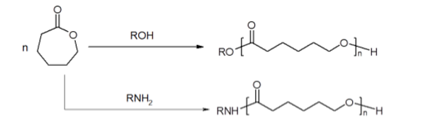 caprolactone-monomer-torsional-strain