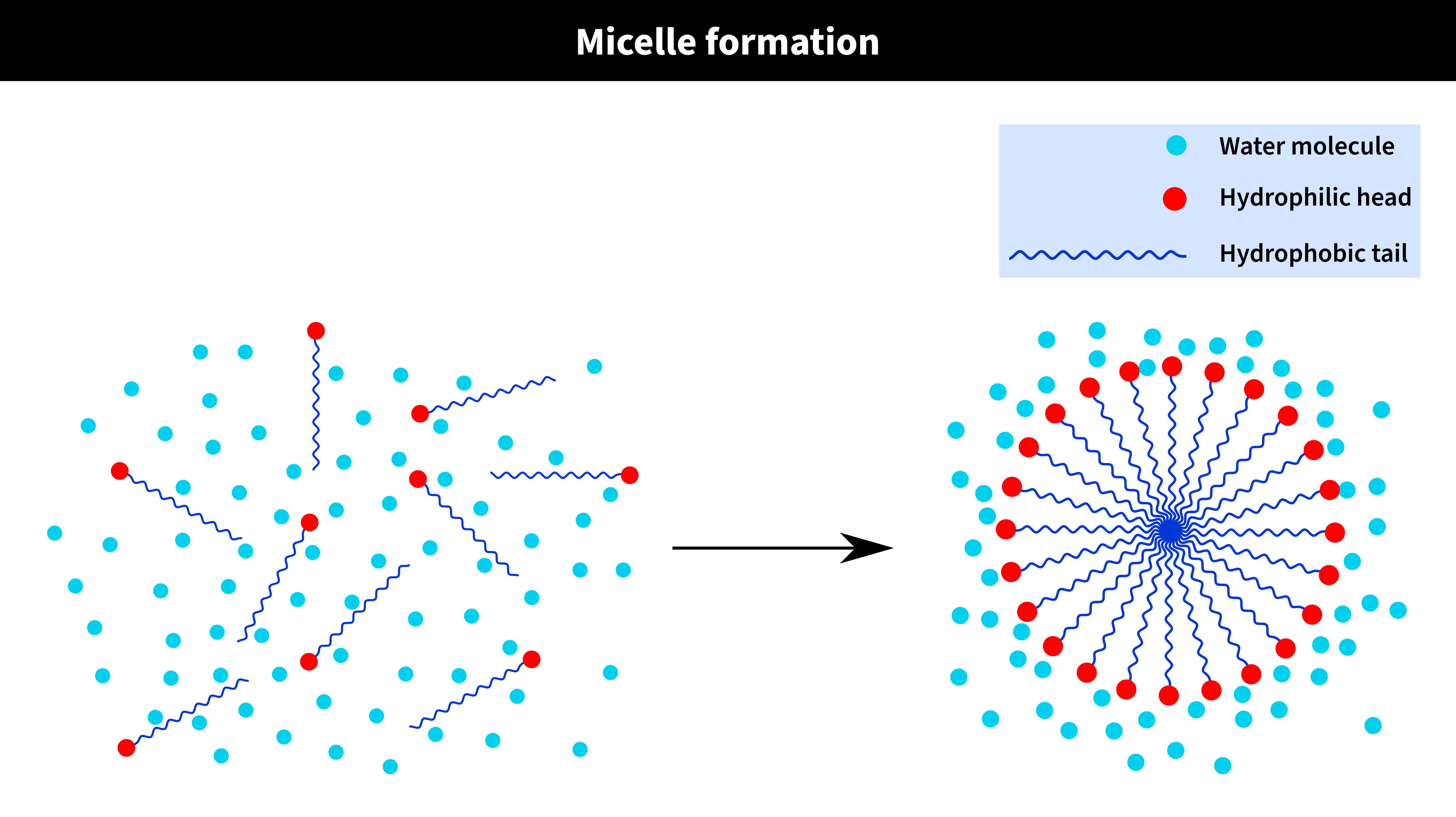 Micelle-Formation